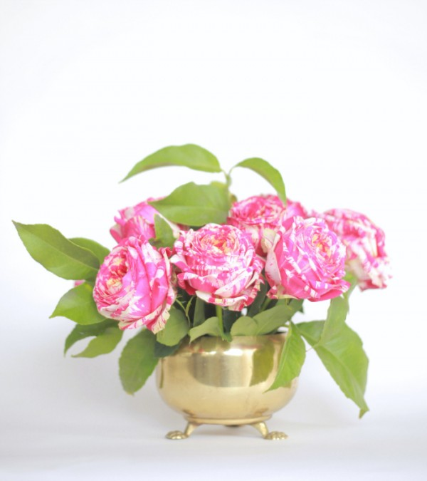 roses700