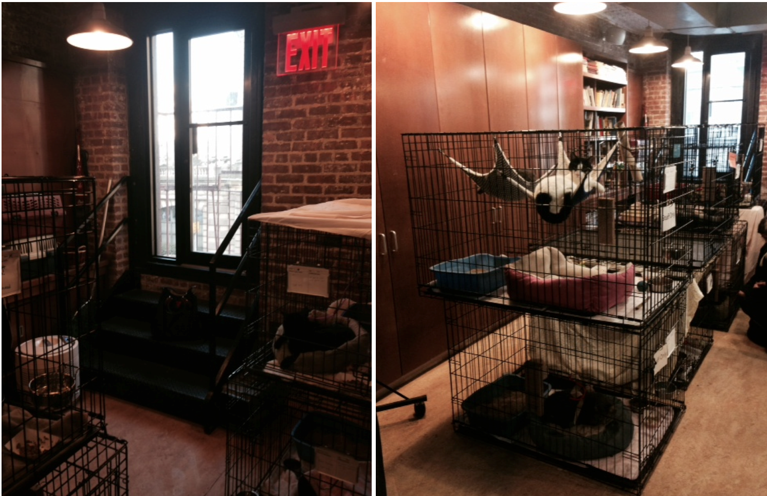 cattery-before-animal-haven