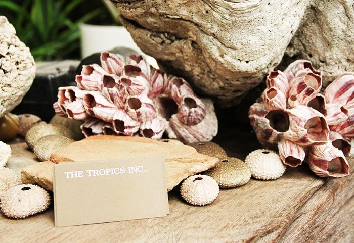 The Tropics Business card