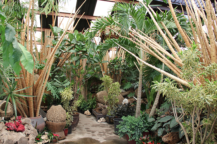 The Tropics Inside 1