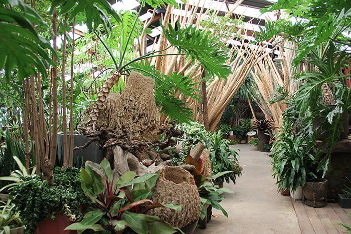 The Tropics inside