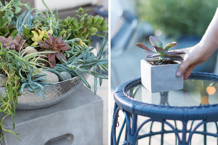 Outdoor_Patio_Succulents