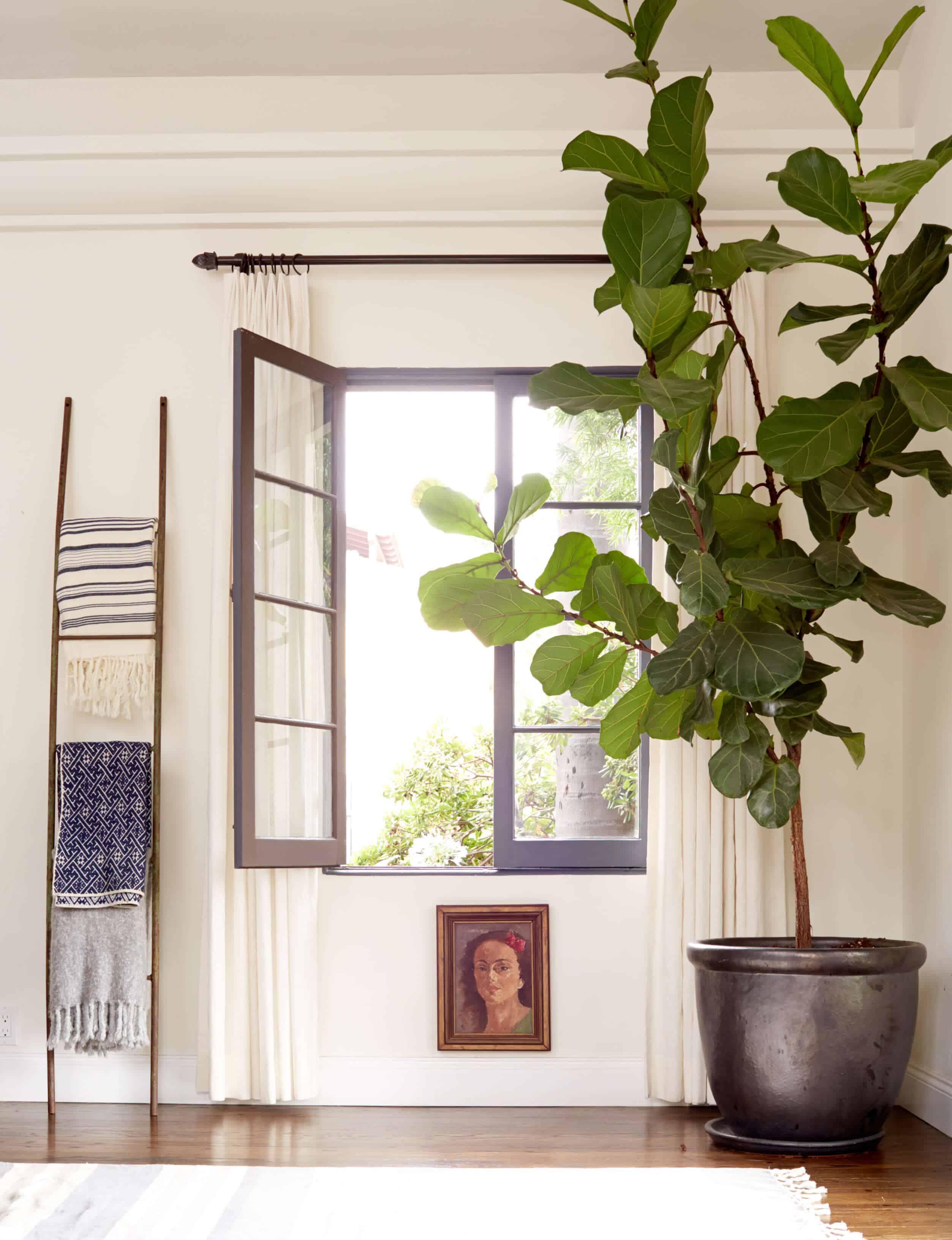emily-henderson_living-room_blue-white_fiddle-leaf-fig_blanket-ladder_inspiration