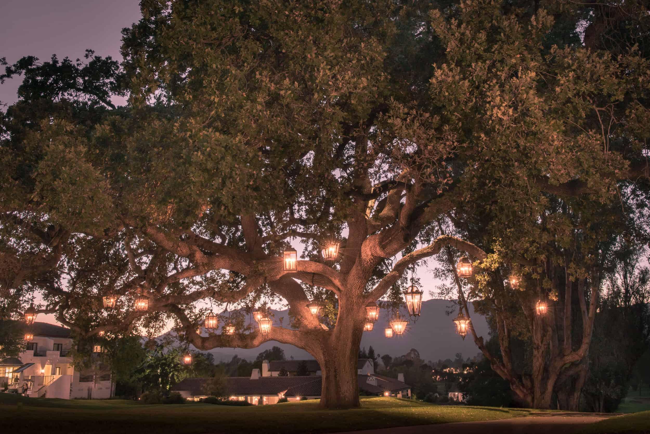 Lanterns Hung In Oak Tree Hanging Lanterns Dusk
