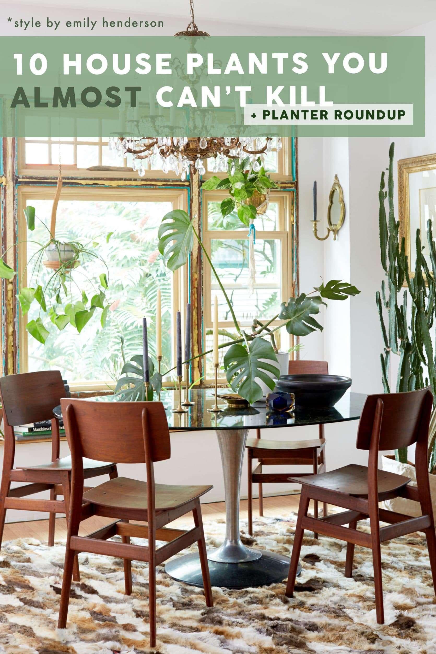 Emily Henderson Plants 10 Cant Kill House Plants 2500 Pinterest