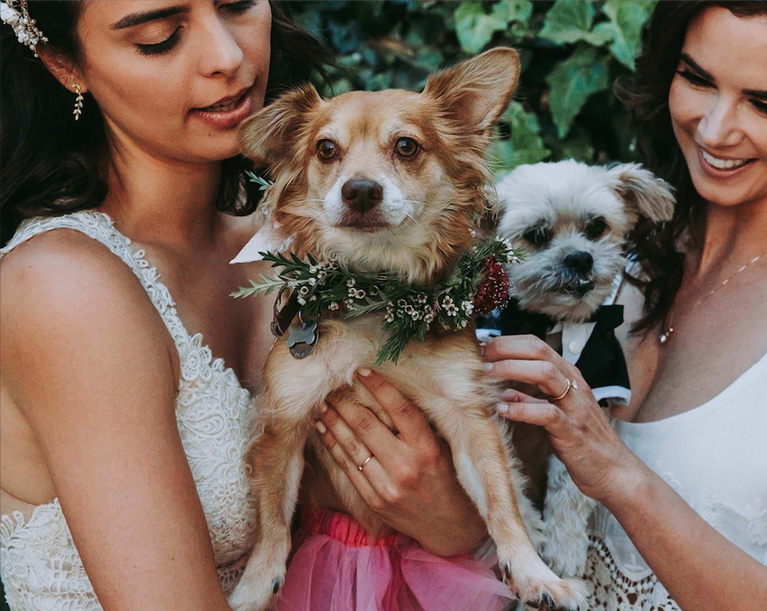 Emily Henderson Design Hellen Wedding Jpg For Blog16
