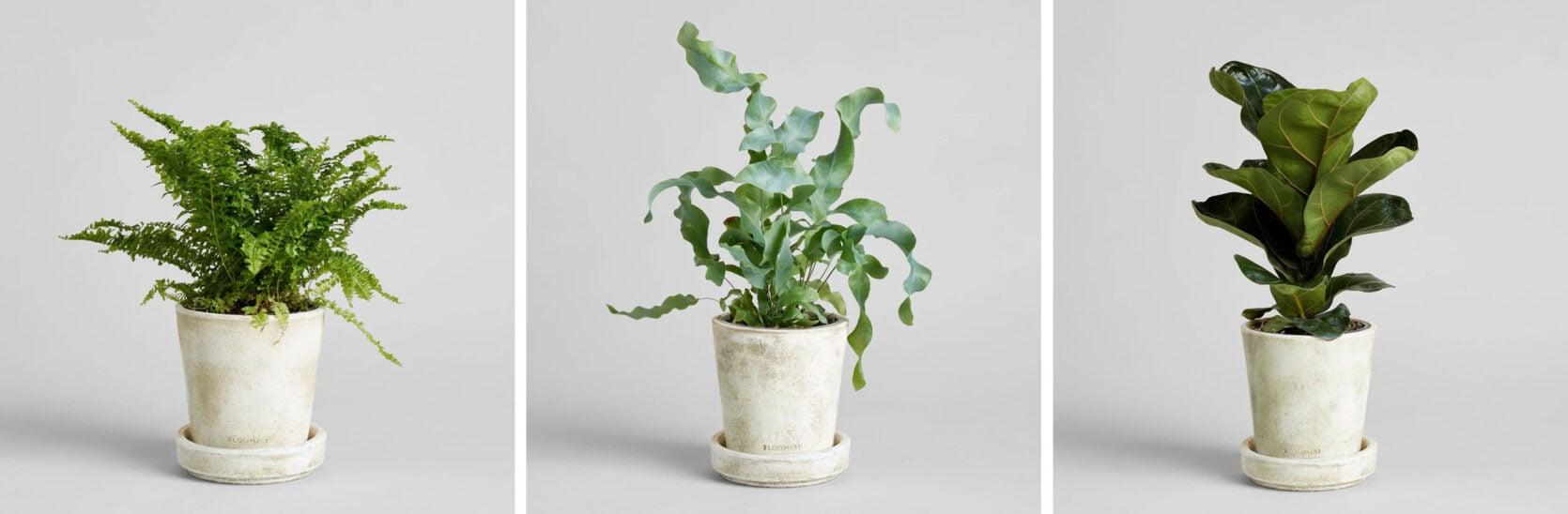 Emily Henderson Online Plant Guide Bloomist