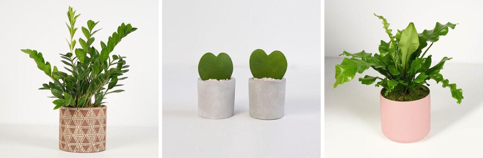 Emily Henderson Online Plant Guide Bouqs