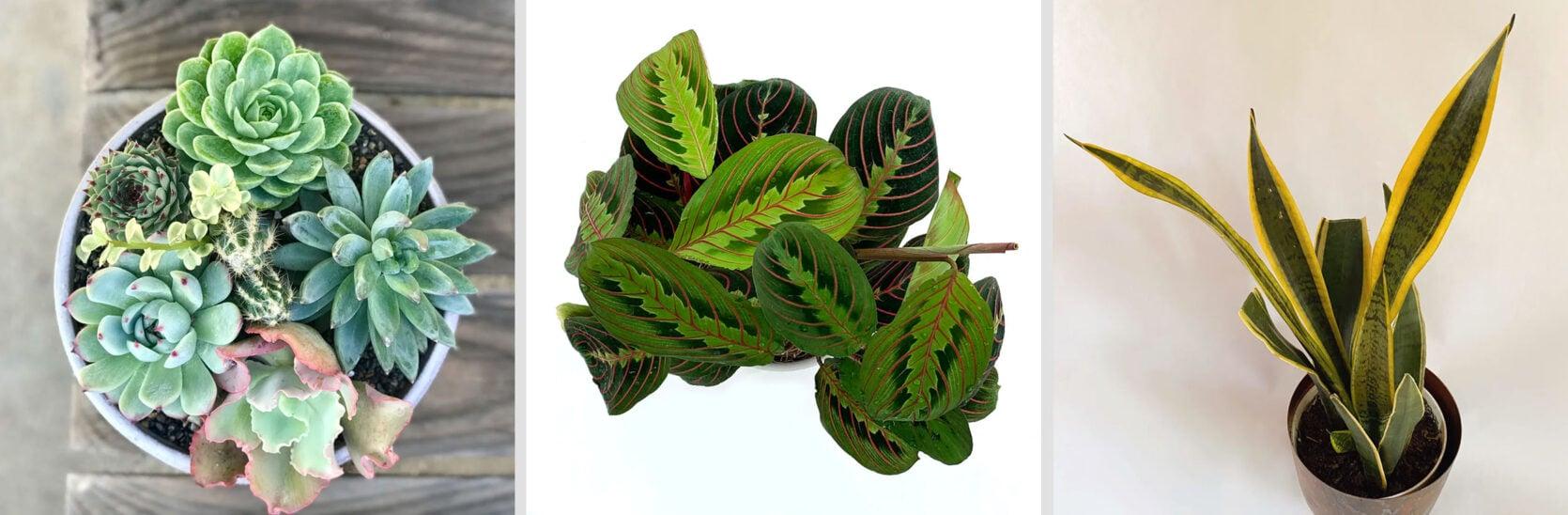 Emily Henderson Online Plant Guide Floom