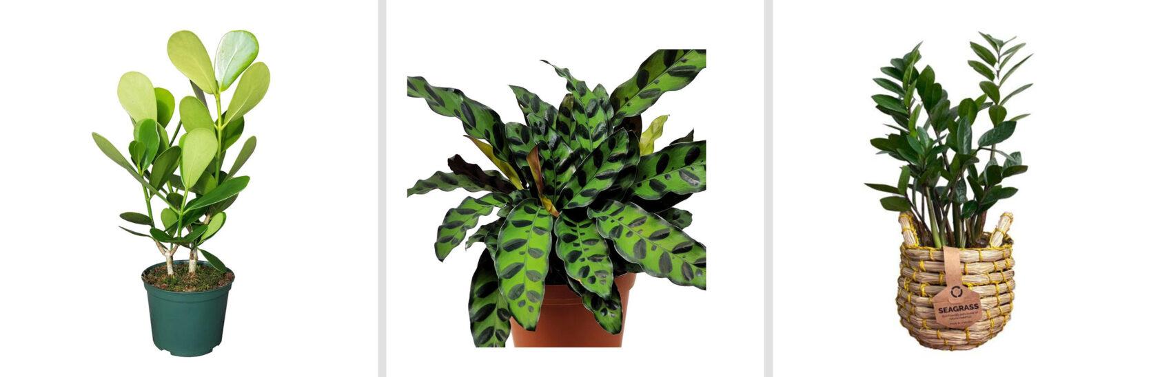 Emily Henderson Online Plant Guide Home Depot