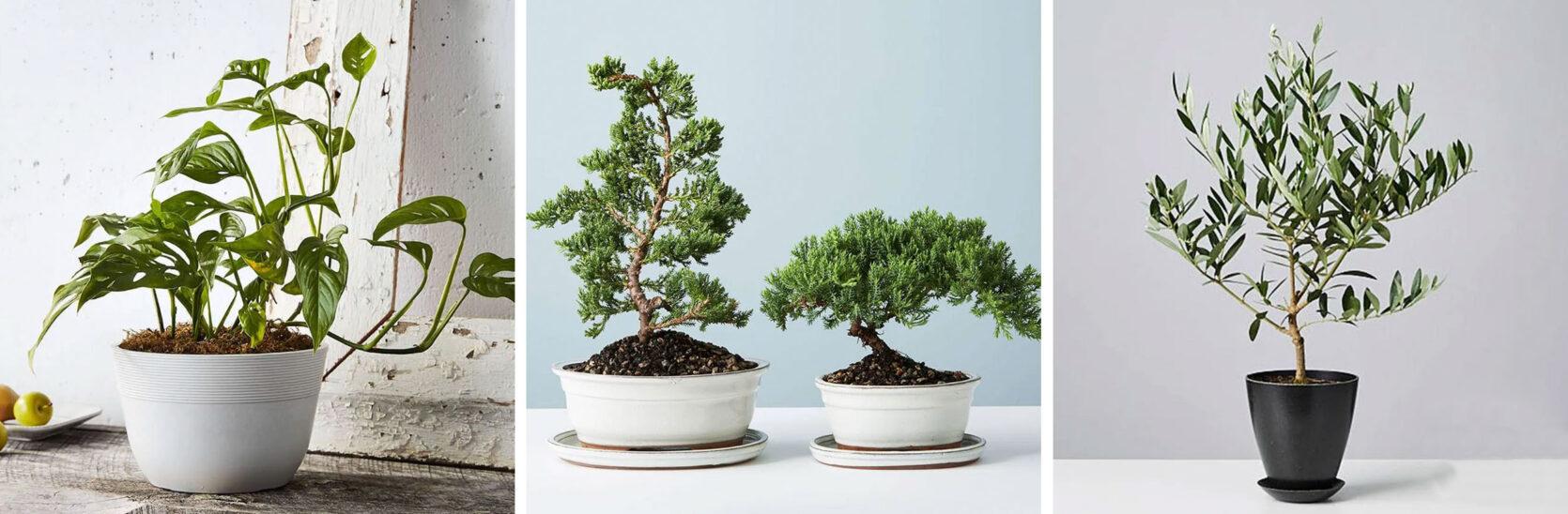 Emily Henderson Online Plant Guide Plantscom