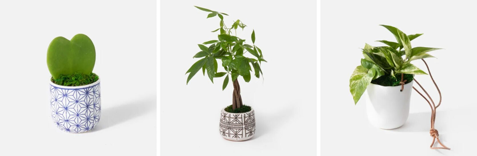 Emily Henderson Online Plant Guide Urban Stems