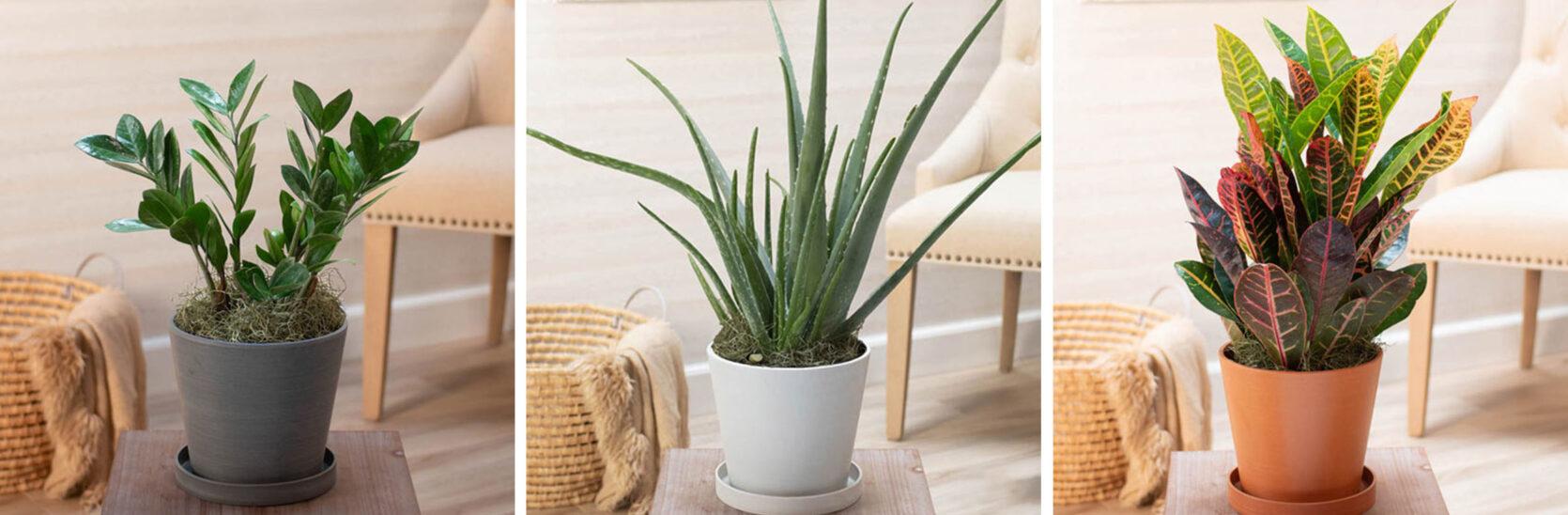 Emily Henderson Online Plant Guide brecks